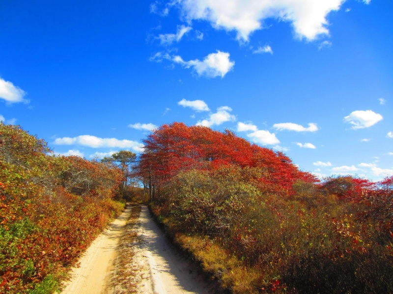 Fall Foliage in Nantucket